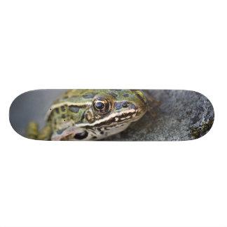 Northern Leopard frog, See-through Island, Skate Board