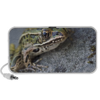 Northern Leopard frog, See-through Island, Laptop Speakers