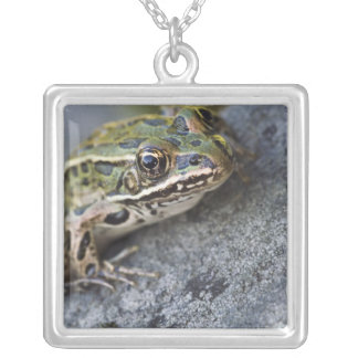 Northern Leopard frog, See-through Island, Square Pendant Necklace
