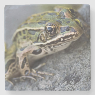 Northern Leopard frog, See-through Island, Stone Coaster