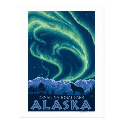 Northern Lights - Denali National Park, Alaska Postcard