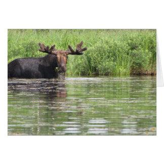 Northern Maine Moose Card