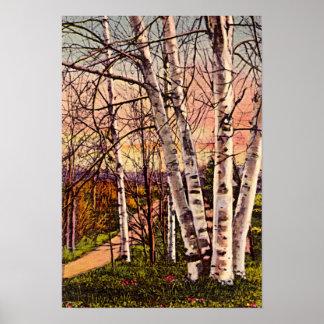 Northern Michigan Birch Trees in Spring Poster