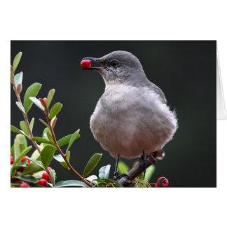 Northern Mockingbird - Joe Sweeney - card