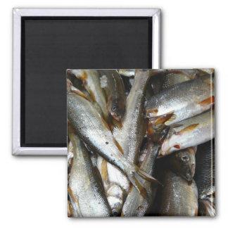 Northern Pike Minnow Fish Magnet