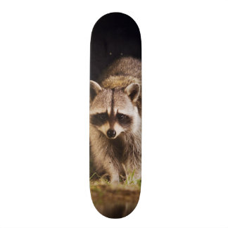 Northern Raccoon, Procyon lotor, adult at 20.6 Cm Skateboard Deck