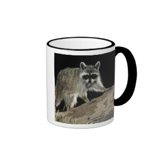 Northern Raccoon, Procyon lotor, adult at 2 Coffee Mug
