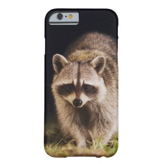 Northern Raccoon, Procyon lotor, adult at Barely There iPhone 6 Case