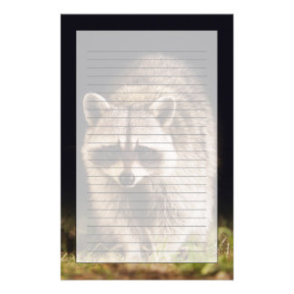 Northern Raccoon, Procyon lotor, adult at Customised Stationery
