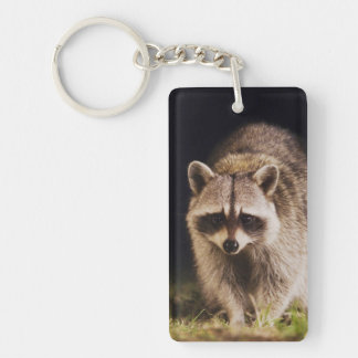 Northern Raccoon, Procyon lotor, adult at Double-Sided Rectangular Acrylic Key Ring