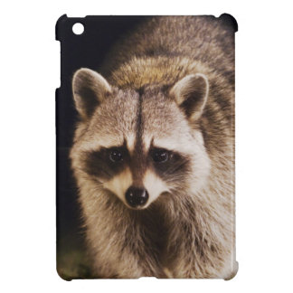 Northern Raccoon, Procyon lotor, adult at iPad Mini Cases