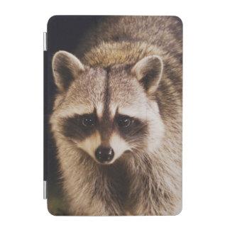 Northern Raccoon, Procyon lotor, adult at iPad Mini Cover