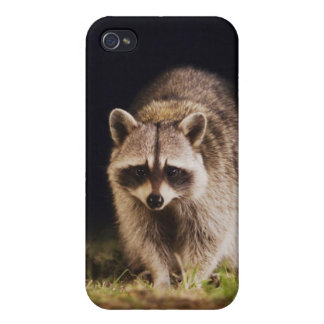 Northern Raccoon, Procyon lotor, adult at iPhone 4/4S Covers