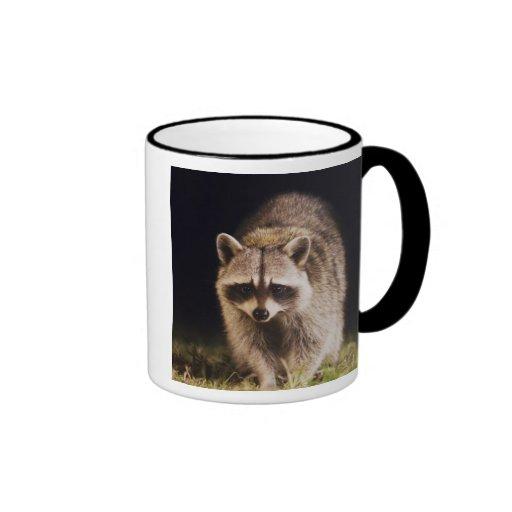 Northern Raccoon, Procyon lotor, adult at Coffee Mug