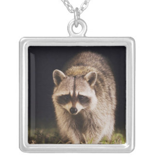 Northern Raccoon, Procyon lotor, adult at Square Pendant Necklace