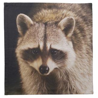 Northern Raccoon, Procyon lotor, adult at Printed Napkin