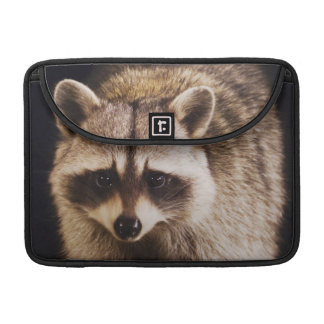 Northern Raccoon, Procyon lotor, adult at Sleeve For MacBook Pro