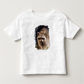 Northern Raccoon, Procyon lotor, adult at T Shirt