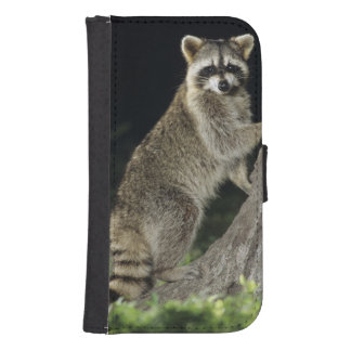 Northern Raccoon, Procyon lotor, adult at tree Galaxy S4 Wallet Cases