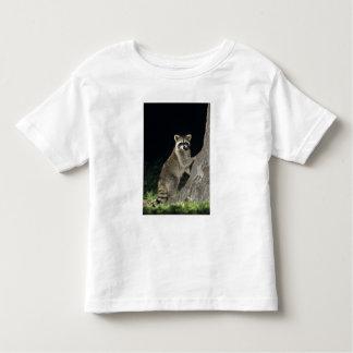 Northern Raccoon, Procyon lotor, adult at tree Tee Shirt