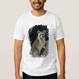 Northern Raccoon, Procyon lotor, adult at tree Tshirts