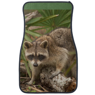 Northern Raccoon Stepping Car Floor Matt Car Mat