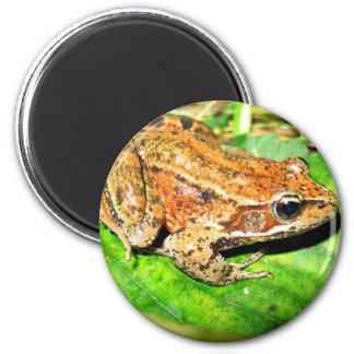 Northern Red legged frog Fridge Magnet