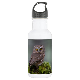 Northern Saw Whet Owl 532 Ml Water Bottle