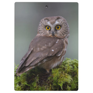 Northern Saw Whet Owl Clipboards