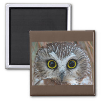 Northern Saw-whet Owl Close-Up Magnet