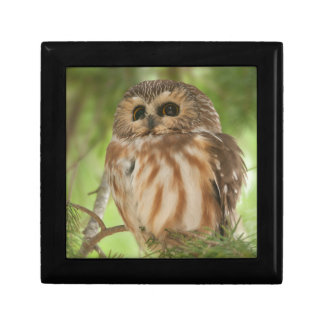 Northern Saw-whet Owl Gift Box