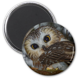 Northern Saw-whet Owl in a Tree Magnet