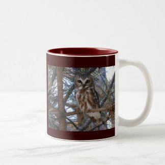Northern Saw-Whet Owl in Pine Tree Two-Tone Coffee Mug