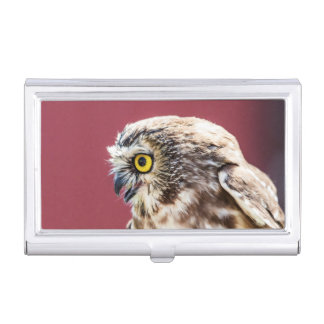 Northern Saw-Whet Owl Portrait Business Card Holder