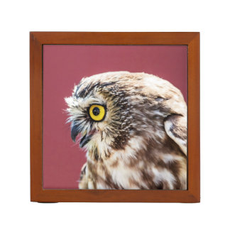 Northern Saw-Whet Owl Portrait Desk Organiser