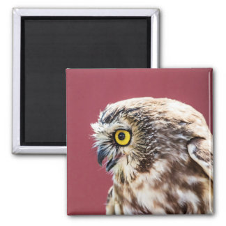 Northern Saw-Whet Owl Portrait Magnet