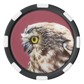 Northern Saw-Whet Owl Portrait Poker Chips