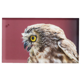 Northern Saw-Whet Owl Portrait Table Card Holder
