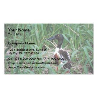 Northern shoveler business cards
