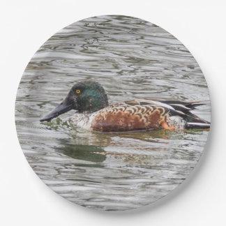 Northern Shoveler Duck 9 Inch Paper Plate