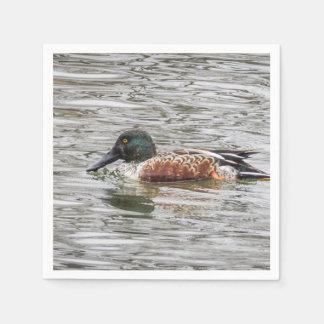 Northern Shoveler Ducks Paper Napkin
