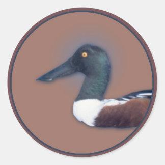 Northern Shoveler Round Sticker