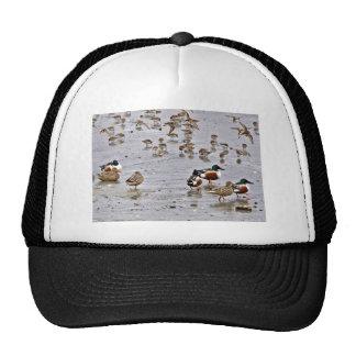 Northern Shovelers Hat