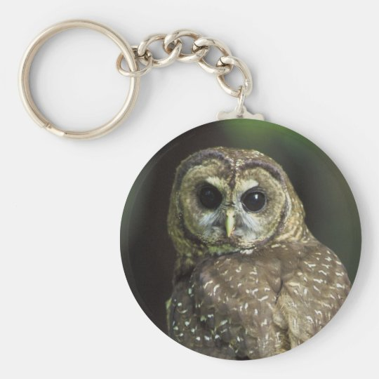 Northern Spotted Owl Basic Round Button Key Ring