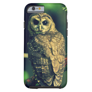 Northern Spotted Owl Tough iPhone 6 Case