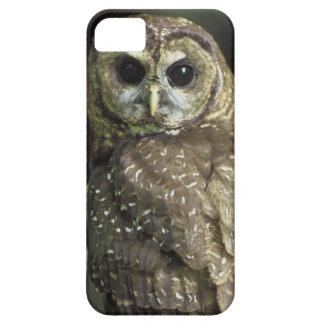 Northern Spotted Owl iPhone 5 Case