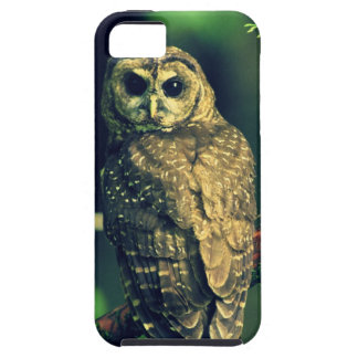 Northern Spotted Owl iPhone 5 Covers