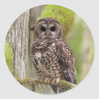 Northern Spotted Owl -Last stand in BC Classic Round Sticker