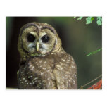 Northern Spotted Owl Postcard
