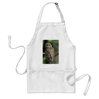 Northern Spotted Owl - Strix occidentalis caurina Standard Apron